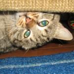 Борис-чудо кот!))) дома :-)