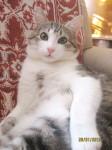 Котик Макс ждет Вас