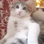 Замечательный котик Макс дома!