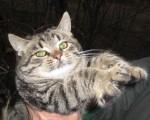 Котенок Барс