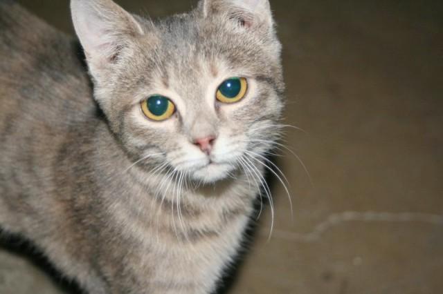 Няшка кошка Фото1