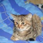 Котеночек Катенька, лапуля :-)  теперь дома..)