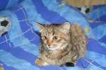 Котенок Катя ждет Вас