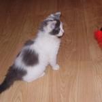 Котик «грязный носик» :)) нашел себе дом