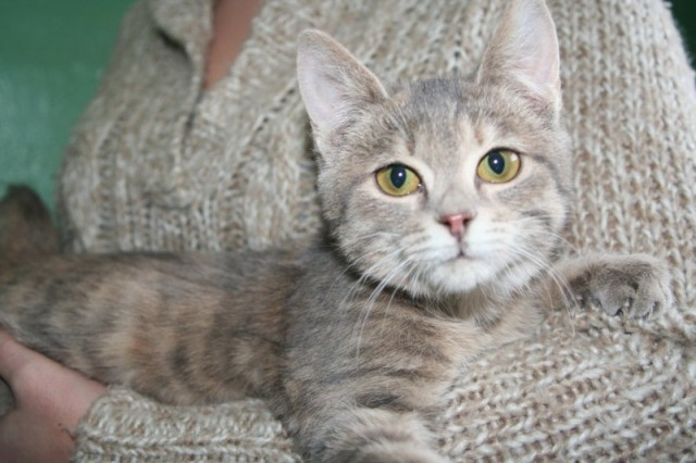 Няшка кошка Фото2