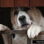 Круглый стол «Животные в городских условиях содержания: права и обязанности владельцев домашних питомцев и проживающих рядом с ними людей»