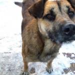 Отважный пес Тёма уехал в новый дом!!