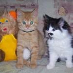 Котята: рыжий и черно-белый — уже дома!