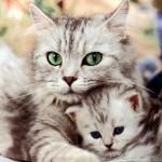 Кошкотерапия или кошки предпочитают манипулировать женщинами