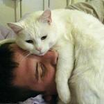 Как организовать лечебный процесс с помощью котов