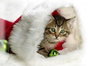 Котенок Новый Год