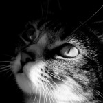 Кошки: мифы и факты