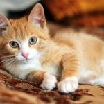Маленький котенок уехал домой
