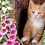 8 августа — Всемирный день кошек!!