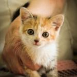 Маленькая кошечка Пышка дома:)