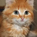 Чего мы не знаем о кошках?
