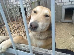 Собака Гектор