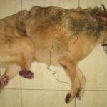 История собаки Бонуса, Санкт Петербург