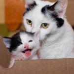 Котята очаровательной Лючи дома..