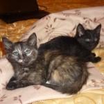 Котятки разъехались по домам