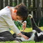 Бездомный кот помог мальчику-аутисту