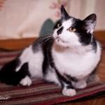 Кошка Маша дома