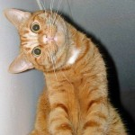 Преимущества взрослой кошки в доме
