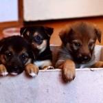 Малютки-щенки разъехались по домам!!!