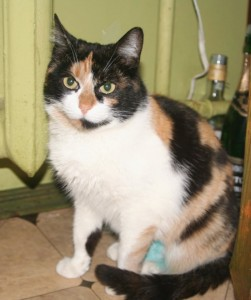Кошка Анфиса Фото2