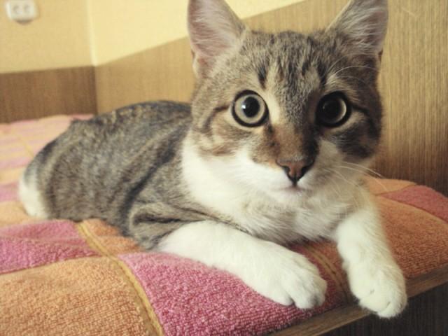 Котик Стас Фото1