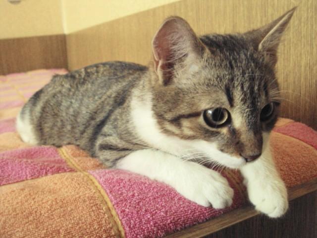 Котик Стас Фото3