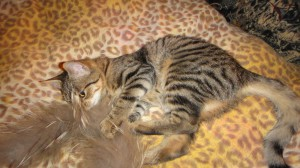 Кошка Машка Фото1