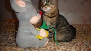 Кошка Машка Фото2