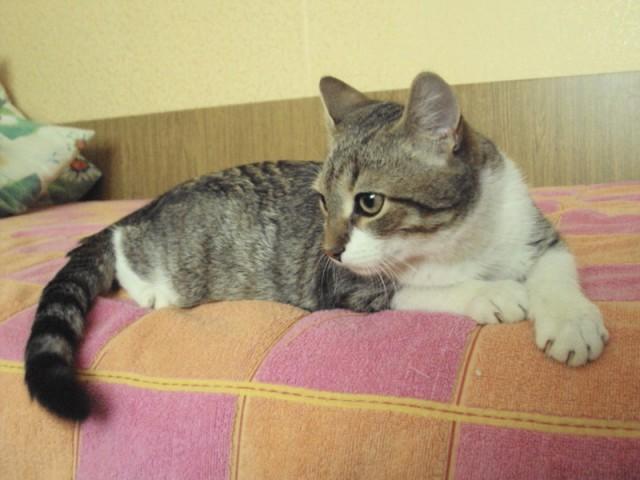 Котик Стас Фото4
