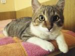 Котик Стасик ждет Вас