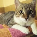 Котик Стасик  обрел свою хозяйку..:-)