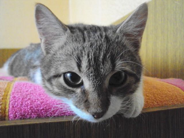 Котик Стас Фото2
