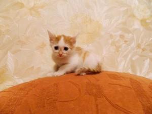 Котенок Гаврюша Фото2