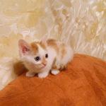 Гаврюша, маленький котик уехал в новый дом!