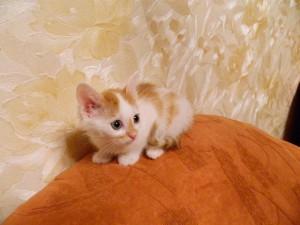 Котенок Гаврюша Фото1