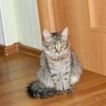 Кошечка Варенька уехала в свой дом :-)