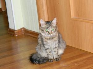 Кошечка варенька Фото2