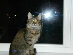 Кошечка варенька Фото1