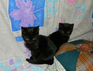 Котята-уголечки Фото2