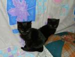 Черные котята ждут имеенно Вас