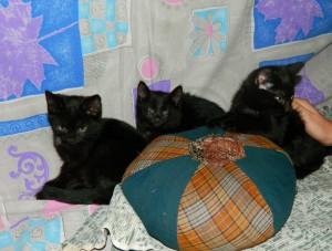 Котята-уголечки Фото1