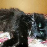 Конфуций — пушистый черный кот нашел свою семью! :-)