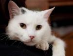 Кошка Миа ищет дом