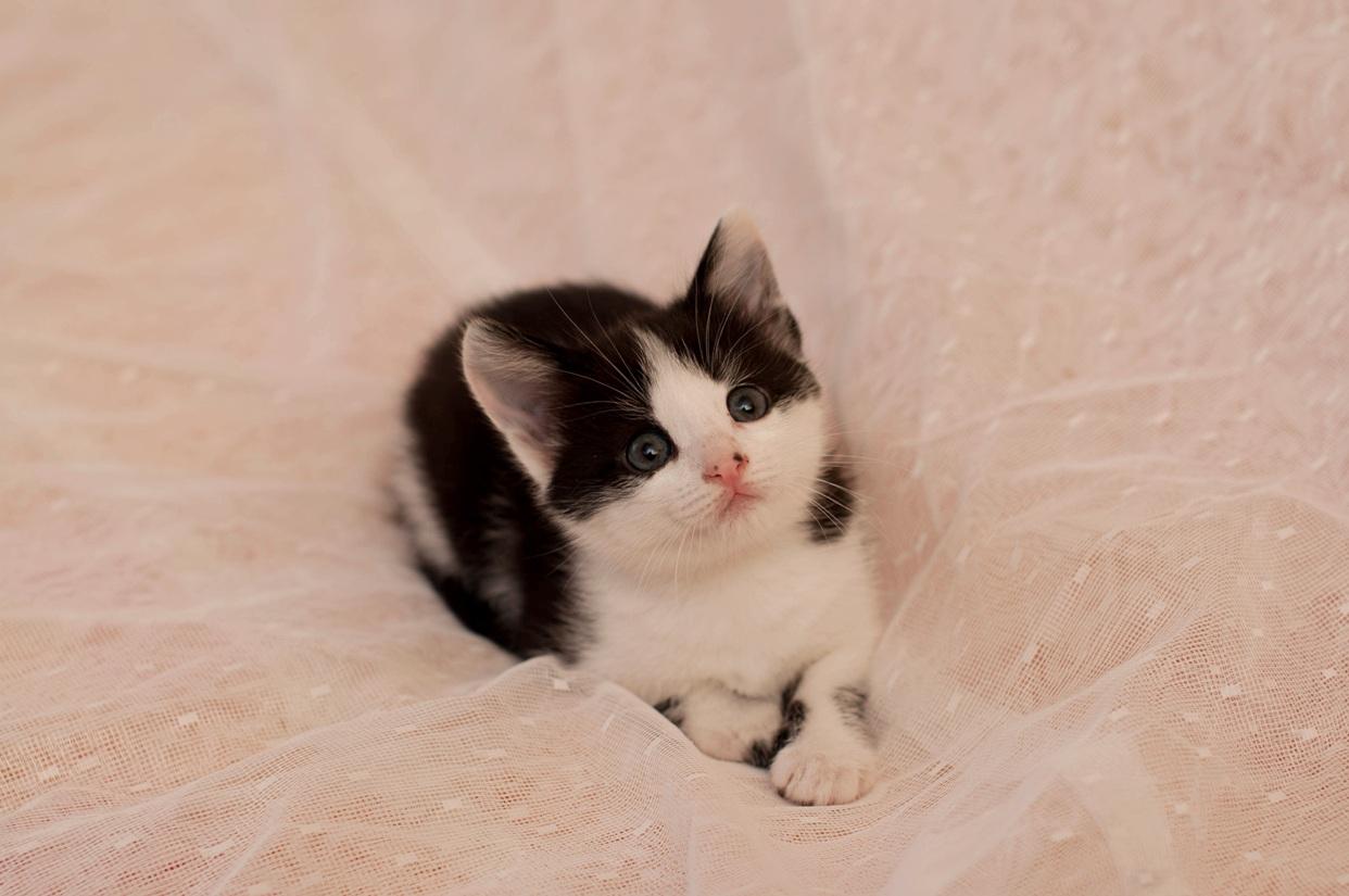 Котеночек ждет Вас