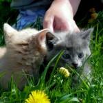 Котятки разъехались по домам!!